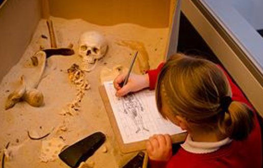 School girl drawing a human skeleton from still life, skull, spine and other bones lying in a box of sand